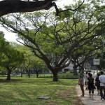 Singapore har mycket grönområden för att vara så tätbefolkat som det är
